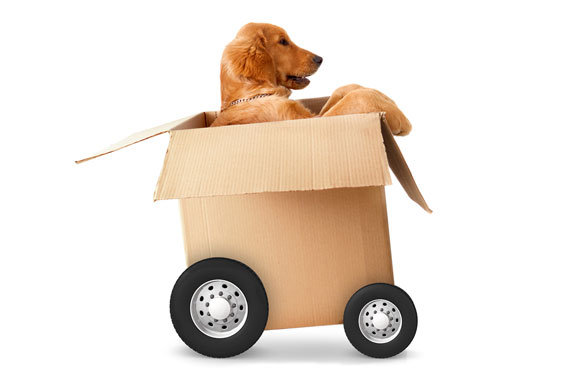 Moving with your Pets - Pets Moving Services Calgary